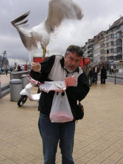 Seagull Nuisance
